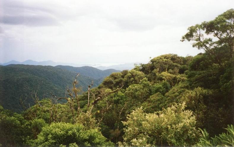 la foresta sulla Graciosa